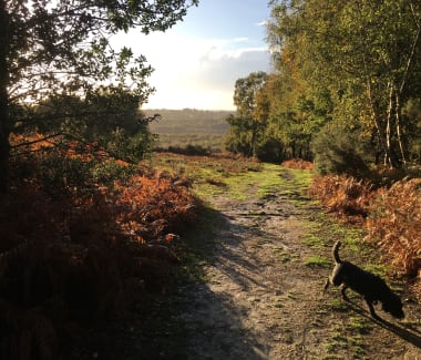 Ashdown Forest walk on a sunny day in late afternoon